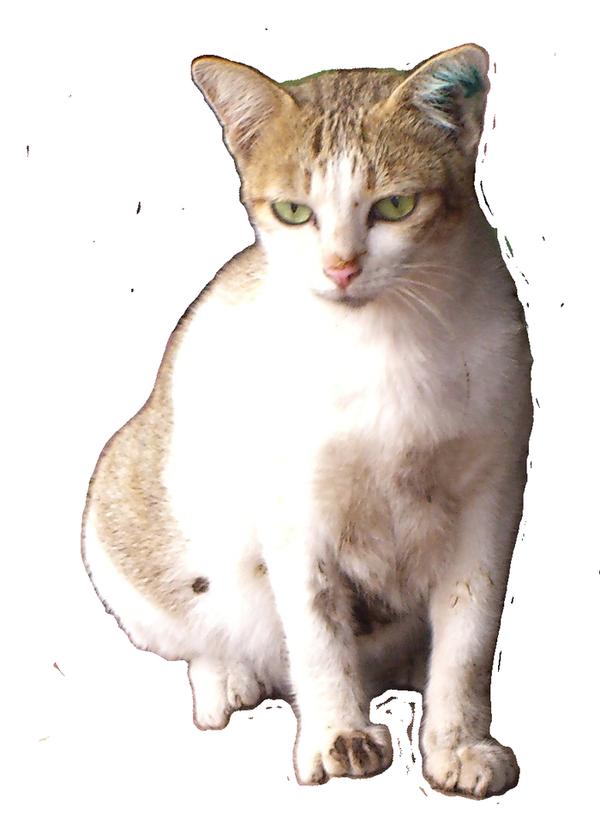 In Cat